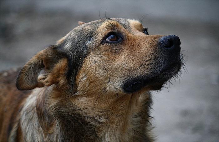 У бродячих псов отличная память. |Фото: rivne.online.