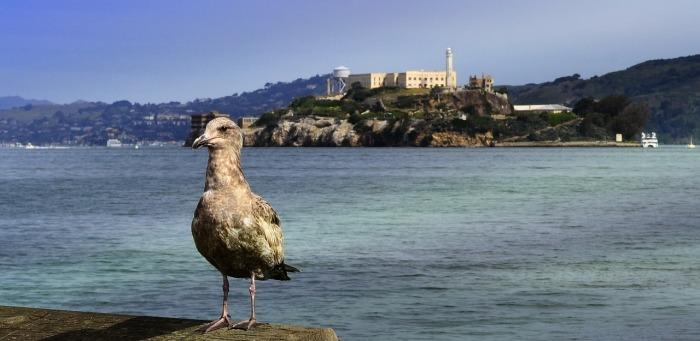 Назван в честь морских птиц. |Фото: pixabay.com.
