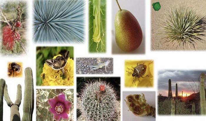 Гибель 30% видов растений и животных связанна с изменениями климата.