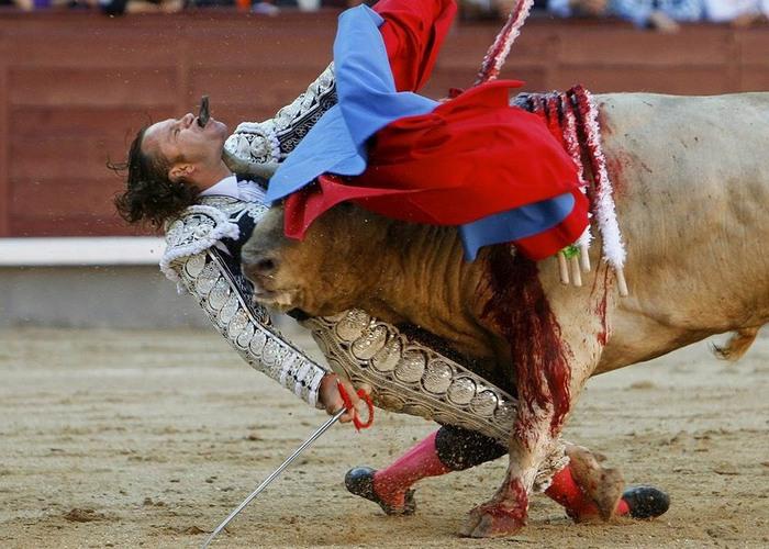 Красный от крови бык, красный от крови матадор...