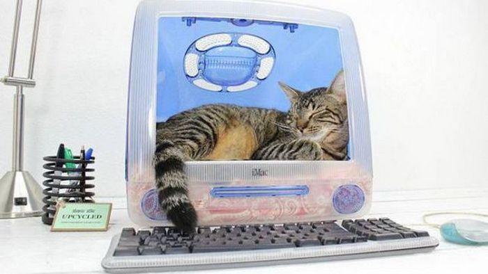 Нестандартное решение: домик для котят из монитора от компьютера.