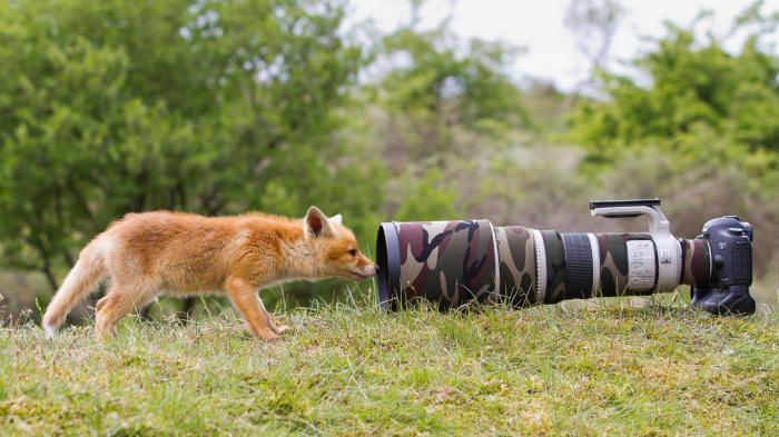 Лучше охотится только с камерой. ¦Фото: nastol.com.ua.
