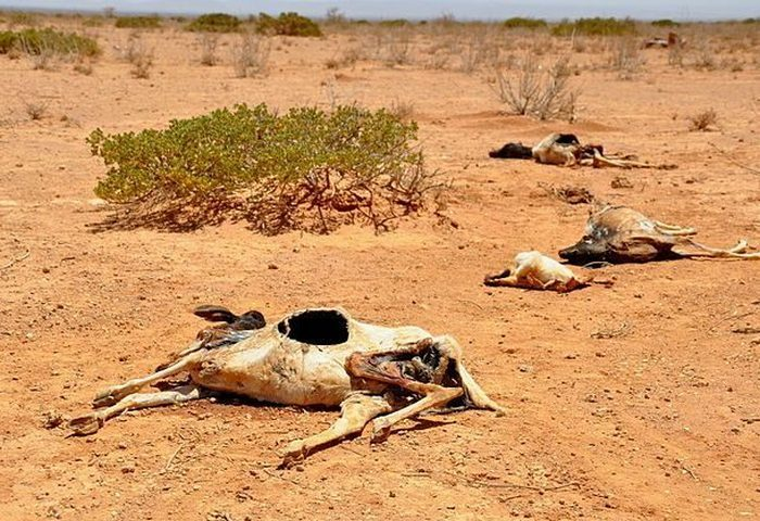 Опасное место: регион Сахель.