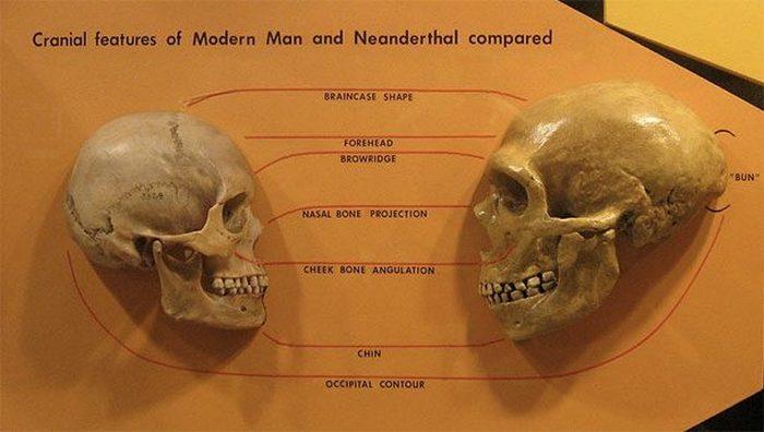 Неандертальцы и Homo sapiens не скрещивались.