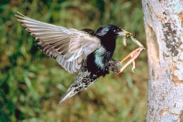 Прозак - гибель для птиц.