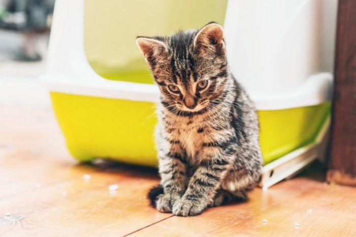 Кошачий туалет как глобальная опасность.