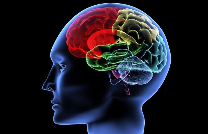 Польза голодания: улучшение функций мозга.