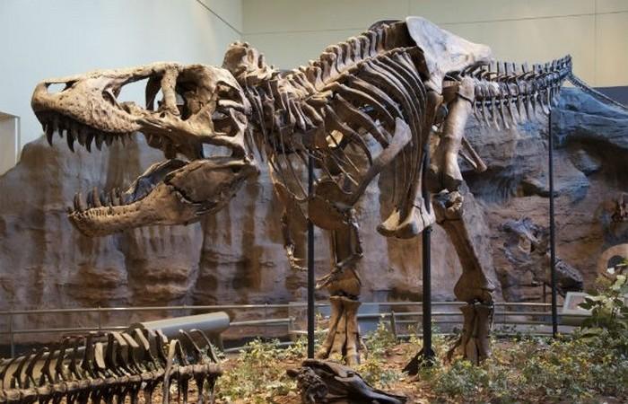 Первые описанные кости динозавров.