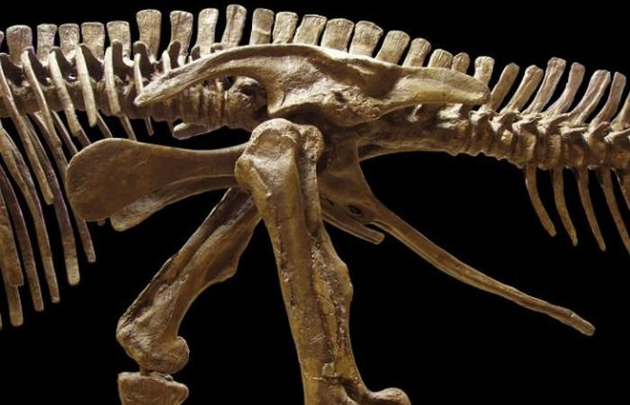 У плотоядных динозавров были полые кости.
