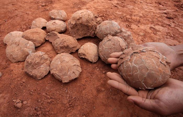 Первую кладку окаменелых яиц обнаружили в Монголии.