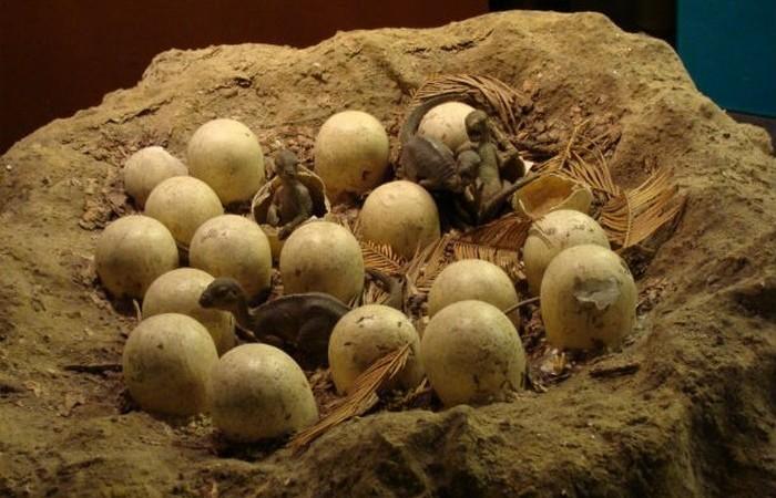 Сорок видов яиц.