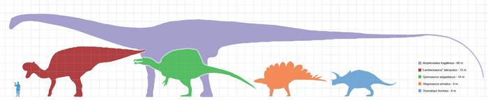 Большинство динозавров имели длинные хвосты.