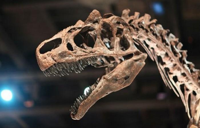 Динозавры - долгожители.