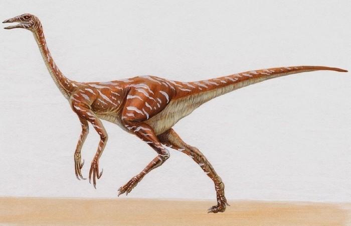 Самый быстрый динозавр - орнитомим.