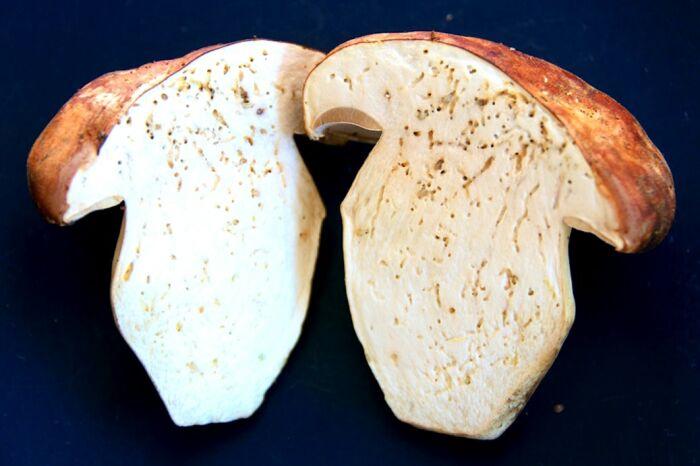 Поточенные грибы на самом деле не проблема. ¦Фото: kipmu.ru.