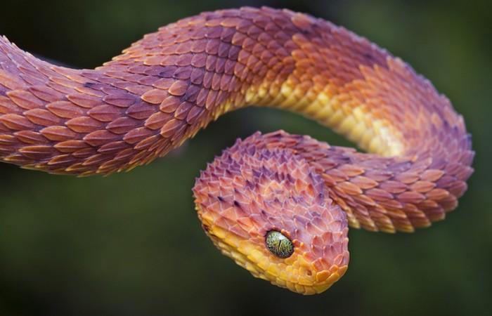 После укуса змеи нужно отсосать яд из раны