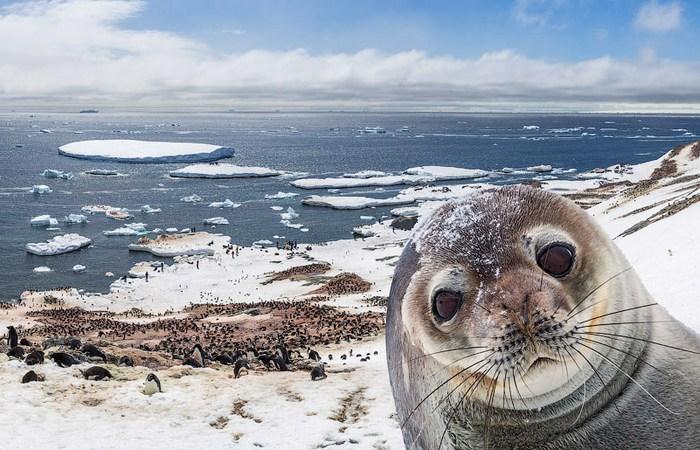 Экологическая проблема: Антарктида.