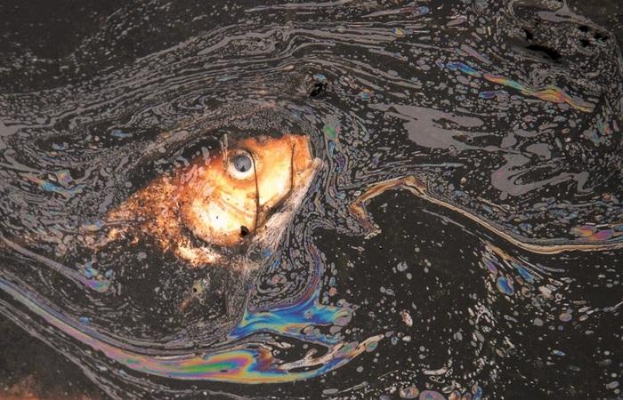 Экологическая проблема: треть британских рыб меняют пол.