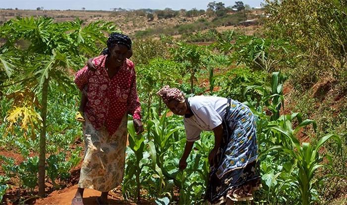 Образование и женщины-фермеры.