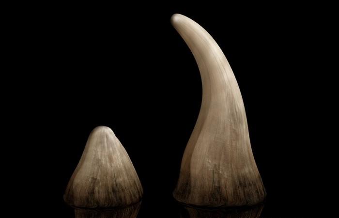 Рог носорога.
