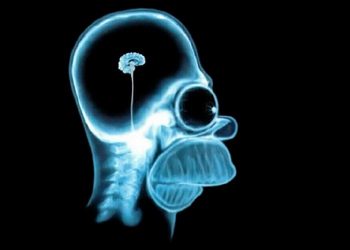 Лженаучный факт: люди используют только 10% мозга.
