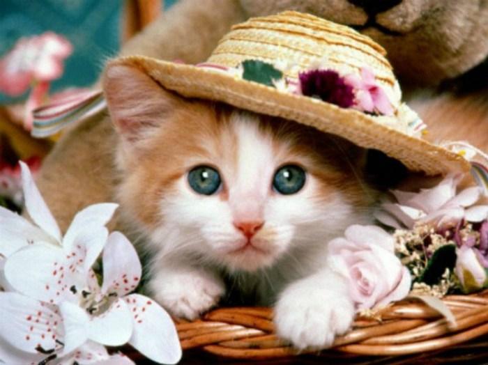 Сайт, знакомств для фанатов кошек.