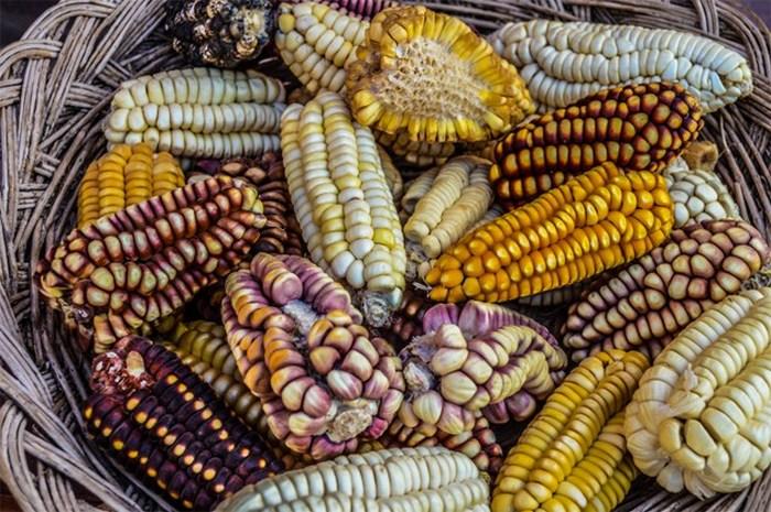 Легенда о кукурузе.