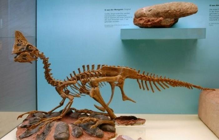 Древняя окаменелость: овираптор.