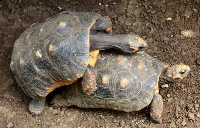 Этим черепахам пока везет.