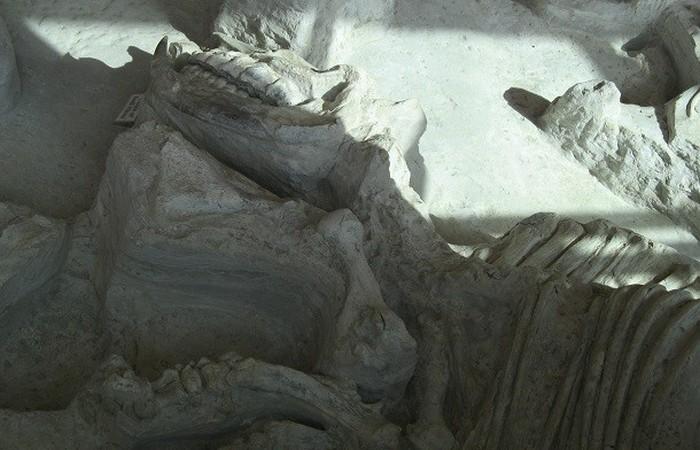 Древняя окаменелость: фекалии гиен.