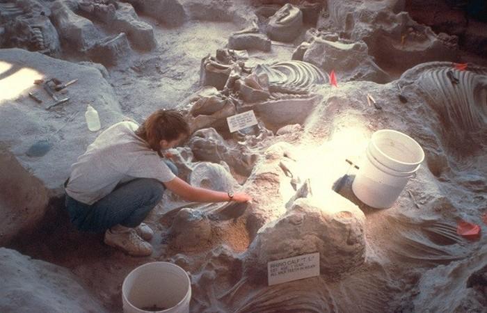 Древняя окаменелость: детеныш носорога.