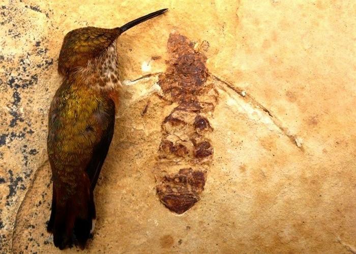 Древняя окаменелость: летающие муравьи.