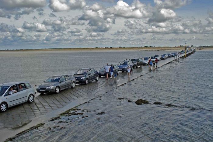 Дорога позволяет людям и животным попадать на остров.