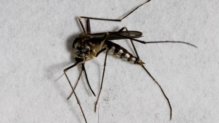 Футуристичное предсказание: комары и мухи вымрут.
