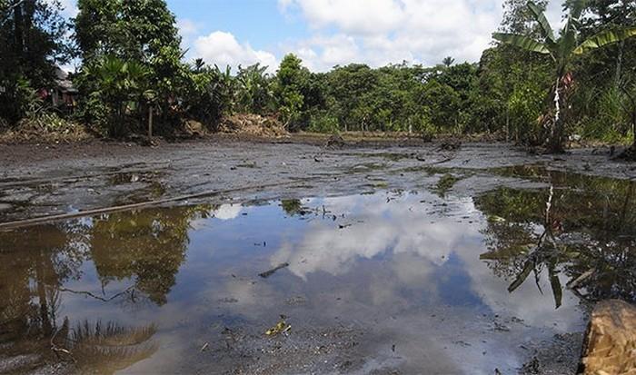 Тропические леса Амазонки страдают от нефти.
