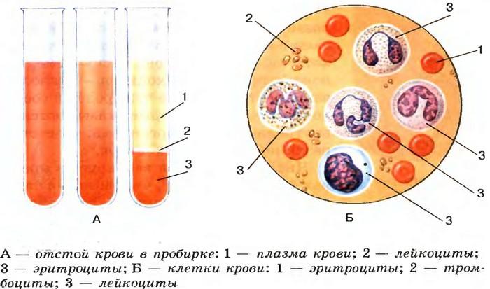 Красные клетки крови, плазма, тромбоциты...
