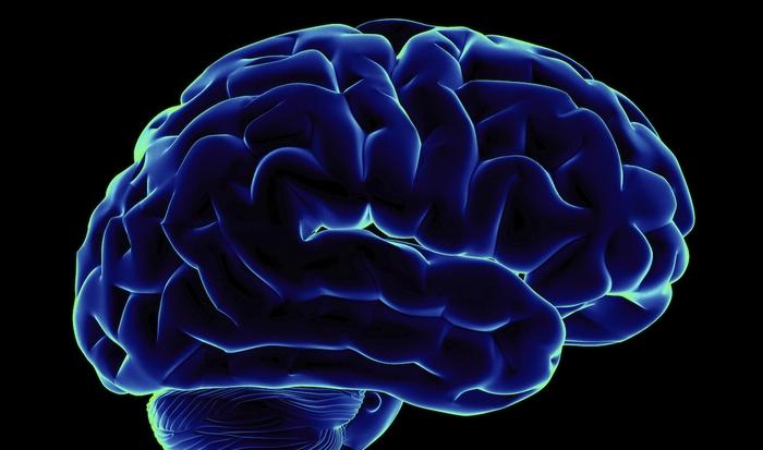 15–20% крови поступает в мозг.