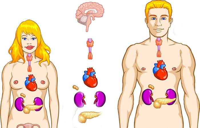 Гормоны и железы внутренней секреции.