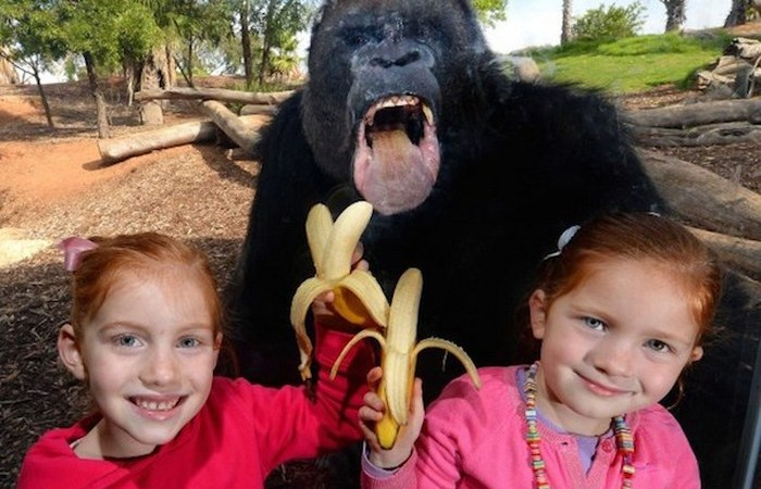 Удивительные случаи, произошедшие в разных зоопарках мира.
