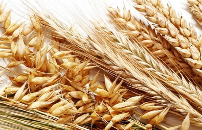 Тест пшеницей и ячменем.