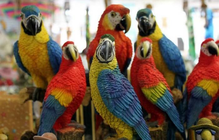 Генератор счастья: говорящий попугай.