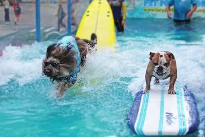 Самая тяжелая парадная платформа с собаками-серфингистами.