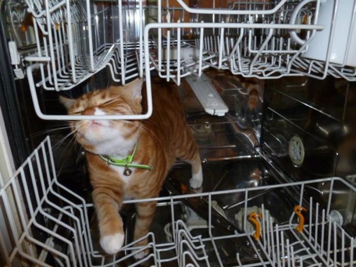 Посудомойка - для очистки практически чего угодно.
