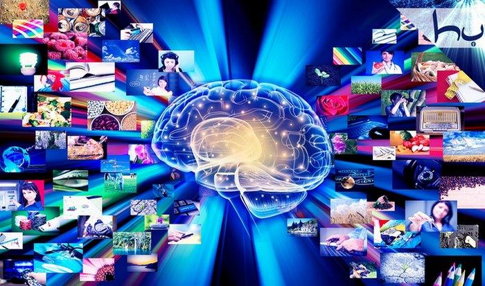 Мозг человека: до 1 квадриллиона «кусков».