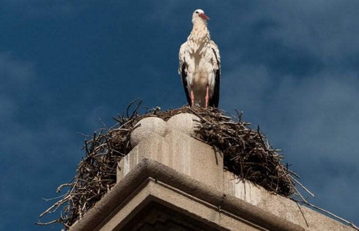 Урбанистическое гнездо.