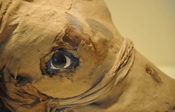 Скандал с мумифицированными животными - спрос родил предложение.