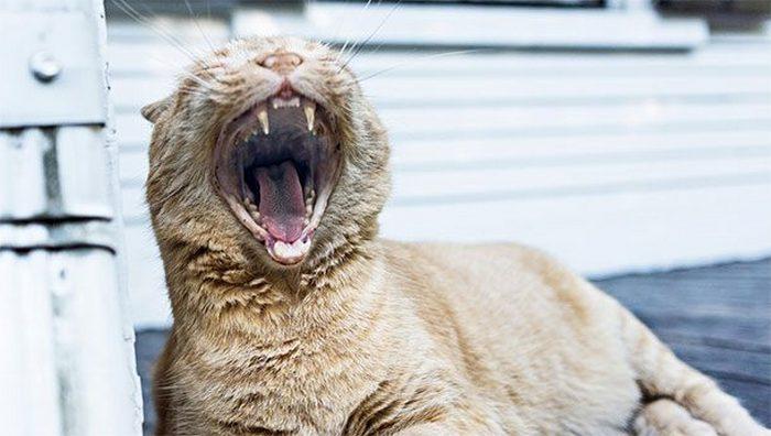 Не до конца понятно: почему люди зевают.