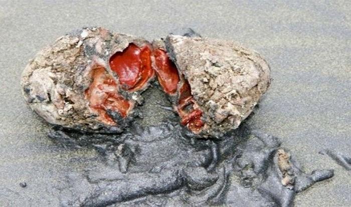 Невероятное природное явление: живые камни.