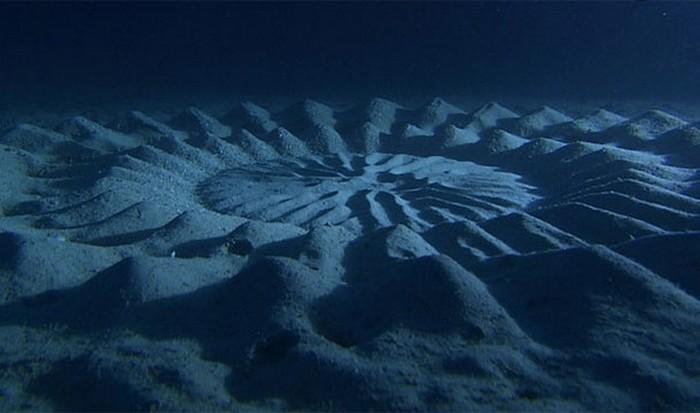 Невероятное природное явление: подводные круги на дне.