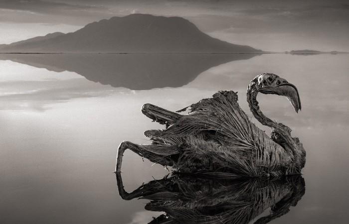 Озеро Натрон в северной Танзании.